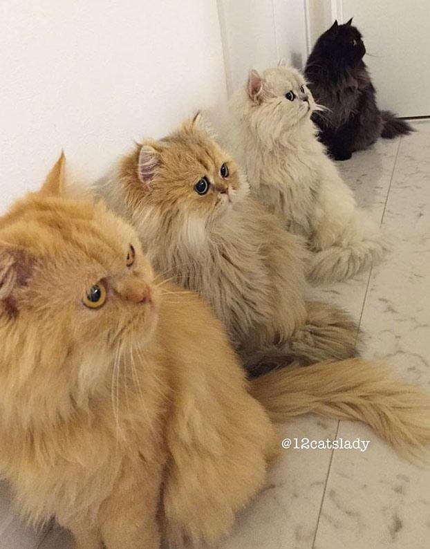 mujer-12-gatos-persas-9