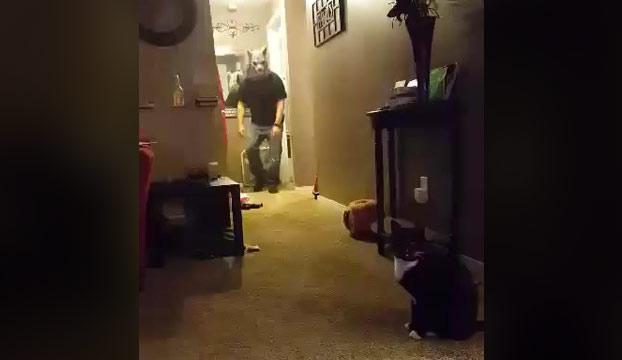 Quería ver cómo reaccionaba mi gato con mi nueva máscara de hombre lobo