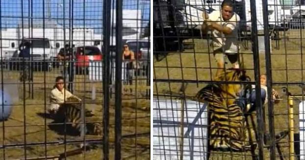 Un tigre ataca a su domadora frente a un grupo de niños