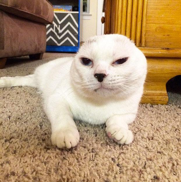 adopta-gato-sordo-3
