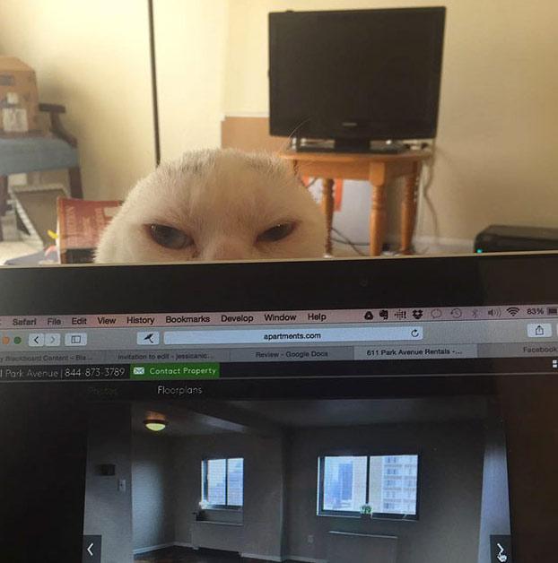 adopta-gato-sordo-4