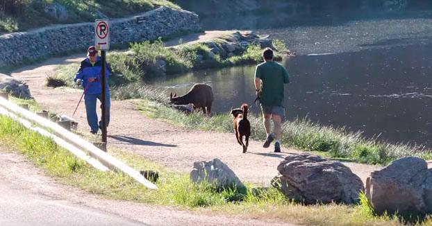 Ese momento en el que vas corriendo con tu perro y un alce os empieza a perseguir (Vídeo)