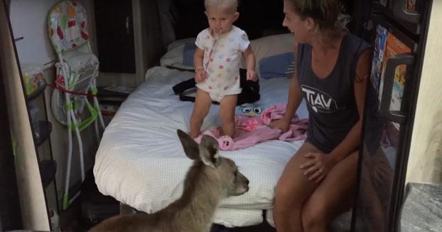 Un canguro entra en la caravana, lo hacen salir dándole comida y un rato más tarde ocurre lo siguiente...