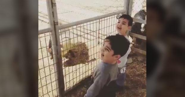 Cuando el chaval entendió la diferencia entre ''ser una cabra'' y ''estar como una cabra''