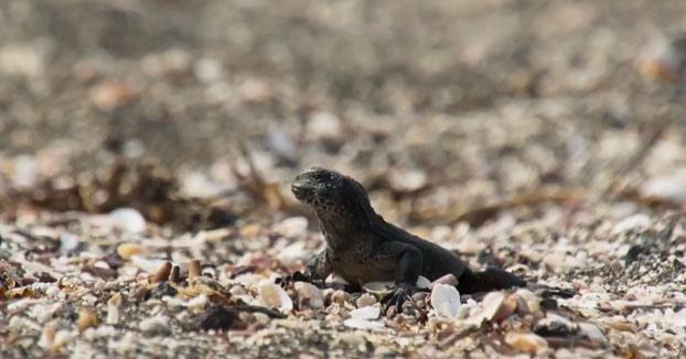 Doblaje del vídeo de la iguana y las serpientes criticando lo difícil que es opinar en Twitter