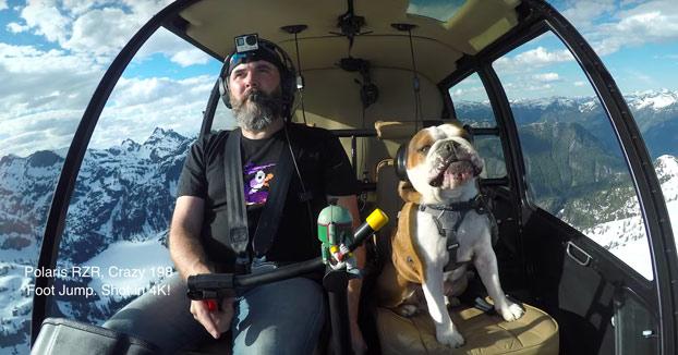 En un solo día este perro ha vivido más aventuras que tú en toda tu vida