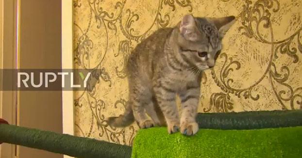 El gato ruso que tiene su propio tanque