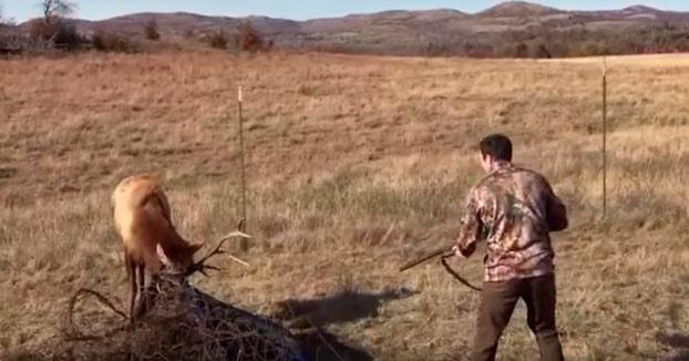 Este ciervo se queda atrapado en una maraña de alambre y un cazador le ayuda disparándole
