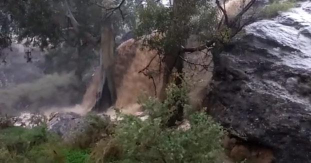 A este hombre le cae un árbol encima mientras grababa una rambla en Murcia (Vídeo)