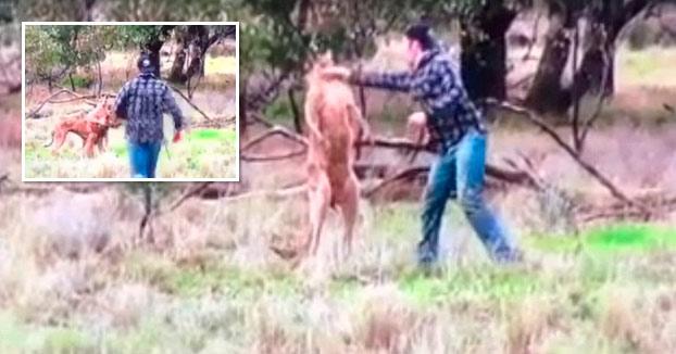 Un hombre le mete un puñetazo en la cabeza a un canguro que estaba estrangulando a su perro (Vídeo)