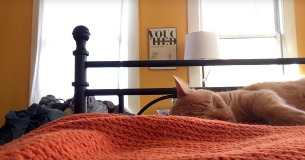 Se venga de su gato por todas las noches que lo ha despertado de madrugada maullando
