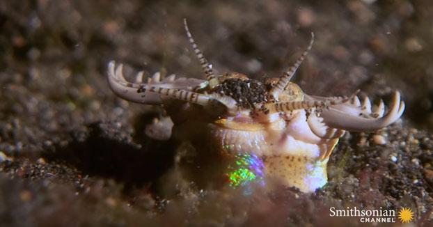 El gusano Bobbit, una criatura que mata sin esperártelo en el fondo del océano