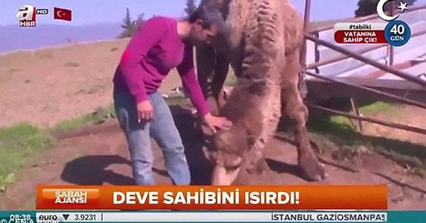 Cuenta a cámara lo bueno que es tener un camello y el suyo le hace lo siguiente...