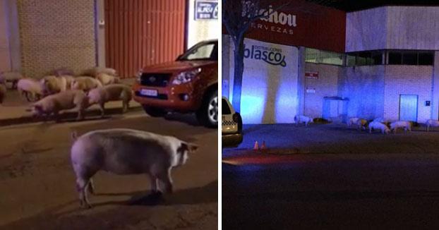 Vuelca un camión que transportaba cerdos en el casco urbano de Huesca (Vídeo)