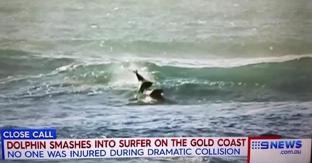 Un delfín salta fuera del agua y cae encima de un surfista (Vídeo)