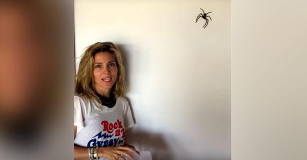 Así es como atrapa Elsa Pataky a las arañas enormes que entran en su casa