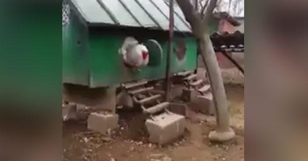 Esperaban que saliera un pollito pero... salió esta bestia