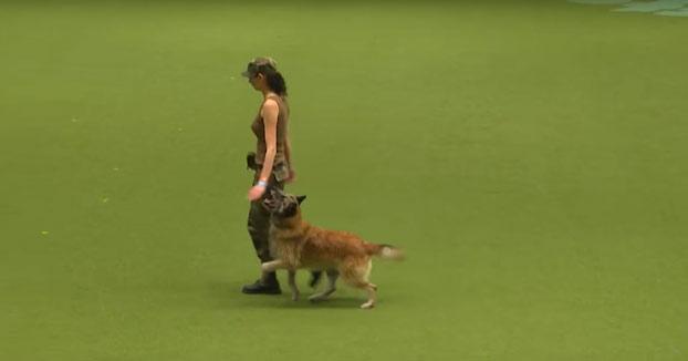 Este perro realiza los primeros auxilios a su dueña después de ser gravemente herida
