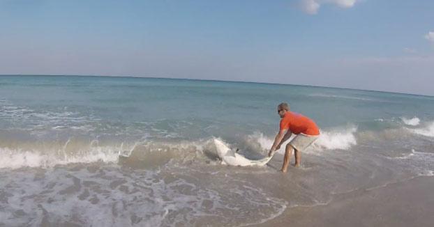 Saca a un tiburón del agua para desenredarlo de una línea de pesca y quitarle un anzuelo (Vídeo)
