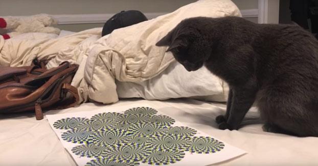 La curiosa reacción de este gato al ver una ilusión óptica en un papel