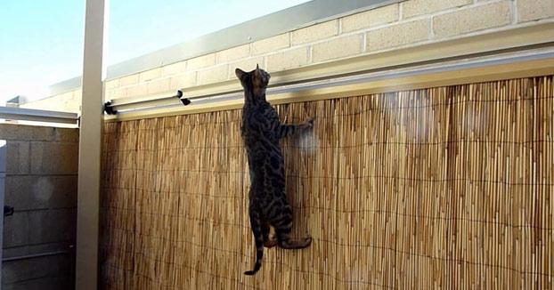 El sistema definitivo para que tu gato no escale