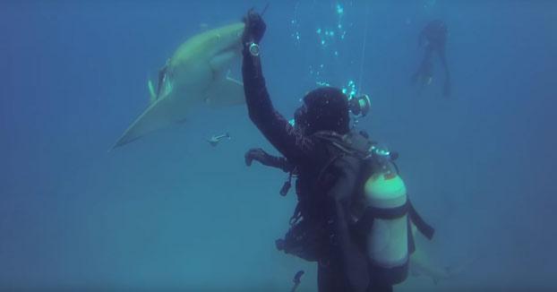 Un tiburón herido nada hacia un buceador para pedirle ayuda