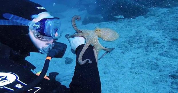 Momento mágico entre un cariñoso pulpo y una submarinista en Tenerife