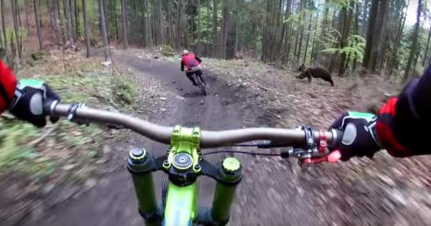 Se han cagado encima: Un oso persigue a dos ciclistas que iban haciendo descenso por el monte