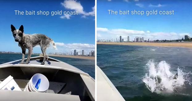 La increíble velocidad que alcanza este perro corriendo al lado de un barco