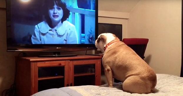 Este bulldog vive al máximo las películas de terror e intenta proteger a las víctimas que están en peligro