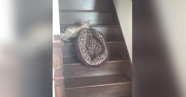 Cansado de tanto ruido se fue con su cama al piso de arriba