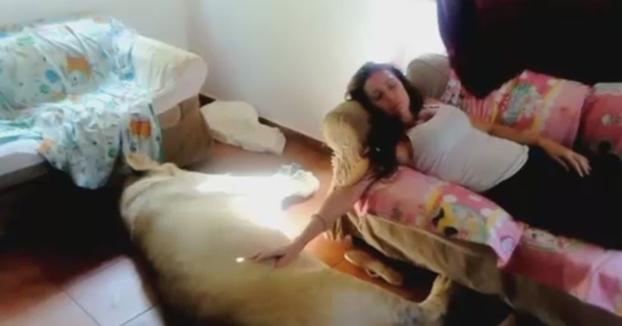 Una familia de Girona vive con un león de 250 kilos en su casa