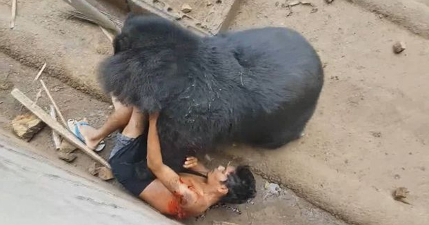 Quiso burlarse de un oso hambriento y casi termina devorado