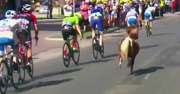 Un poni se cuela en una etapa de la vuelta ciclista a Polonia