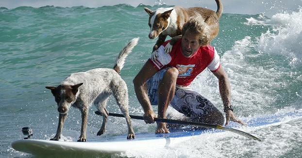 Sus dos perros, los mejores compañeros para hacer surf