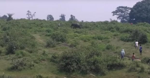 Un elefante pisotea y mata a un hombre que quiso hacerse un selfie cerca de él (Vídeo)