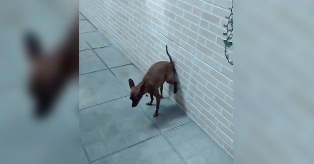 ''Grabé este vídeo para que todos mis amigos viesen la habilidad de mi perro Jully''