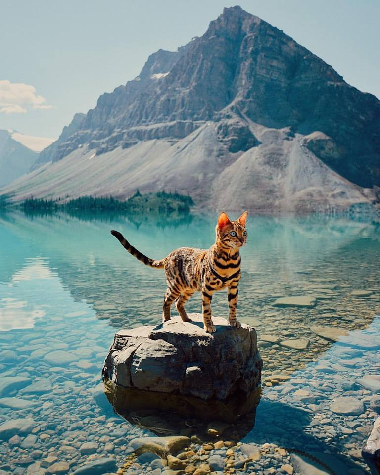 Si te gustan los gatos, al ver estas fotografías te enamorarás de Suki The Cat