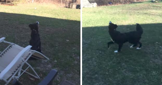 Este perro cree que la luna es una pelota y necesita jugar con ella