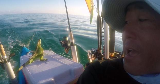 Salva a una iguana perdida en el mar a 4 millas de distancia de tierra firme