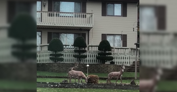 Volvía a casa del trabajo cuando vi esta escena en el jardín de mi vecino