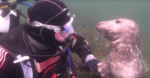 El adorable comportamiento de esta foca al encontrarse con un humano bajo el agua