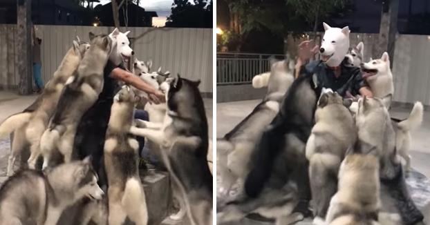 Perros dando la bienvenida a su nueva casa a un perro-humano