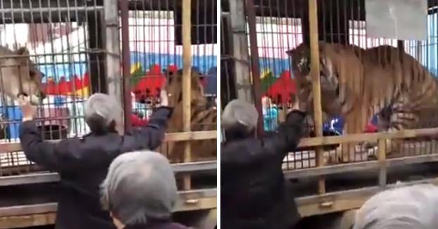 Un jubilado es atacado por un tigre de circo al meter la mano en la jaula para darle de comer