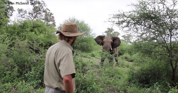 Cómo detener la embestida de un elefante