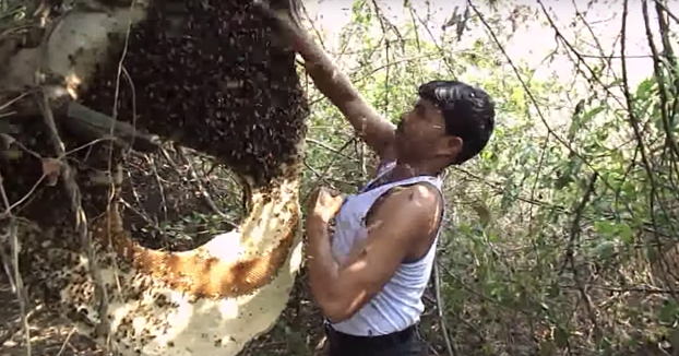 El peligroso método de un apicultor indio para poder recolectar miel