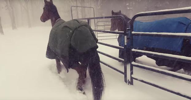 La reacción de dos caballos cuando los sacan para que jueguen con la nieve
