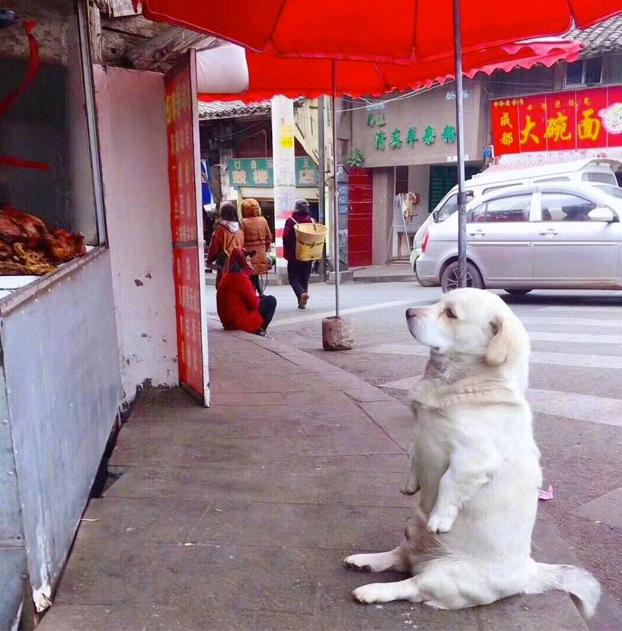 Aquí, esperando a por el pollo asado...