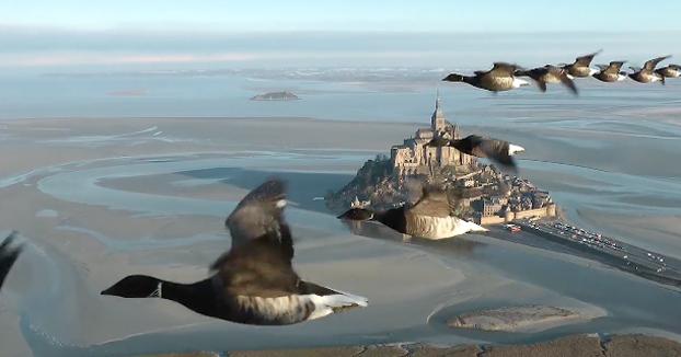 Maravilloso: Volando en ultraligero tocando las aves sobre el Monte Saint-Michel