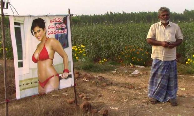 Un campesino protege su cosecha con la foto de una estrella porno